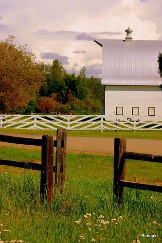 flowers trees sky nature field grass alaska architecture clouds barn fence landscape friend farm roads daytrip rebeak mygearandme mygearandmepremium