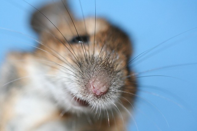 mrs mouse up close and personal