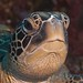 Turtle at Bunaken by Kleine Cos