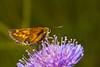Schmetterling.... by mmeyer51