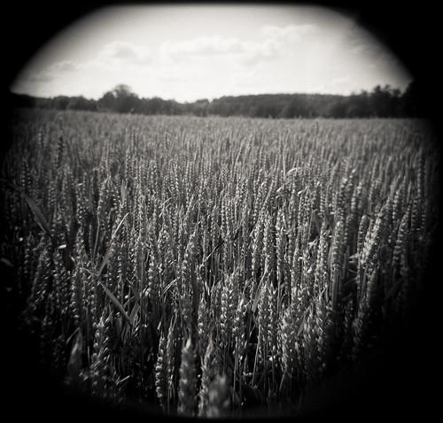Seeds by bildministeriet