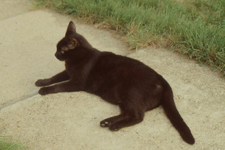 Arlington - Panther on Sidewalk