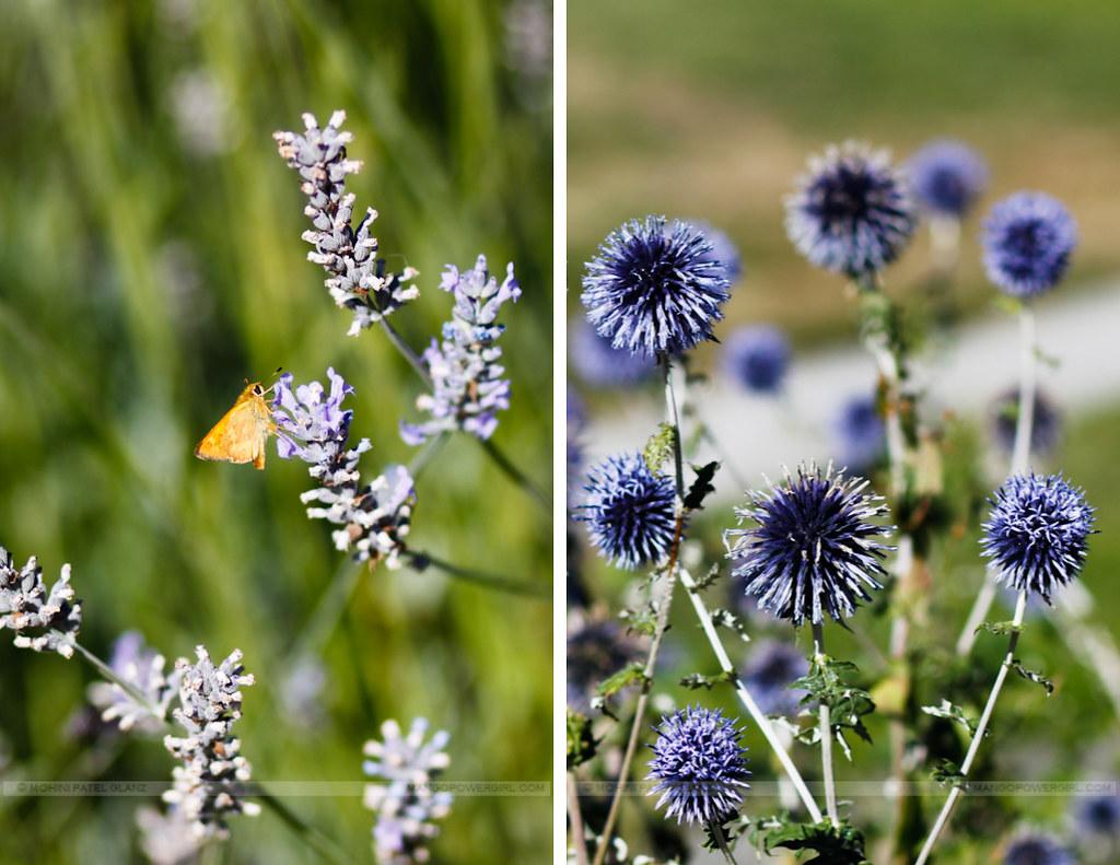 lavender & thistle