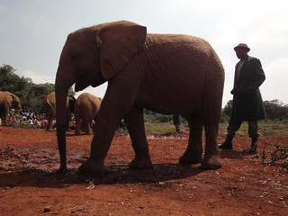 David Sheldrick Wildlife Trust, Quenia