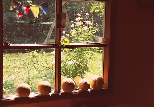 cantaloupe in the late summer light.