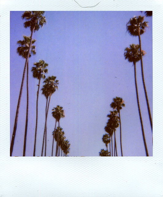 Palm trees - Polaroid 779 - 20110709 - 779 - 09_2009 - Scan - img064_72dpi