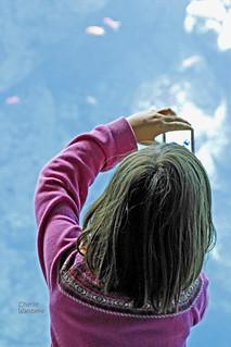 Girl taking picture Academy Of Sciences Aquarium Golden Gate Park SF 110710-122319