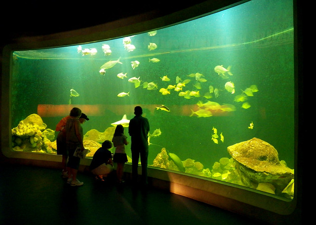 National Mississippi River Museum & Aquarium Explore zambu ...
