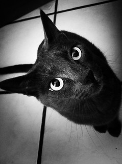 Gato #3