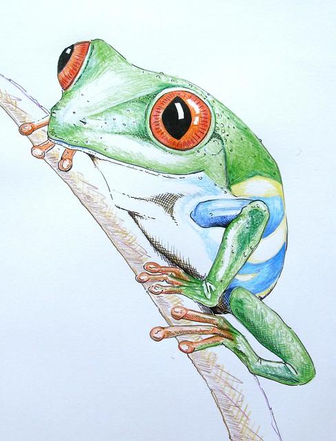 Tree frog Drawing   Flickr - Photo Sharing!