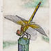 Dragonfly - Woodblock