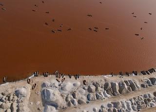Image of Lac Retba. africa boats salt harvest westafrica senegal kap bateau kiteaerialphotography afrique pinklake lacrose autokap lakeretba sénégal 7rokkaku