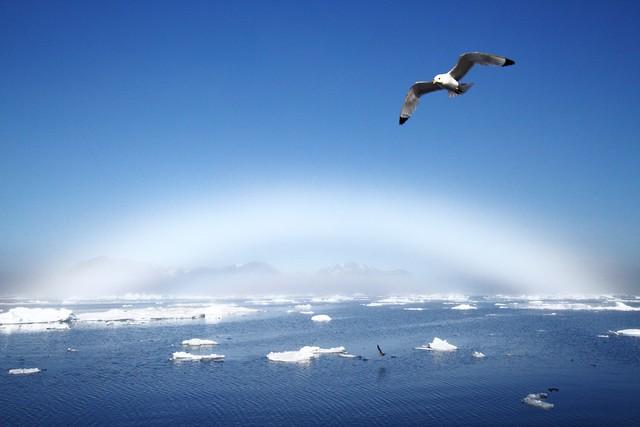 Fogbow over Spitsbergen
