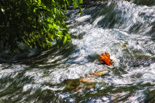 nature water leaves river movement drama φύλλα φύση νερό ποτάμι κίνηση δράμα