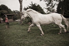 Unicorn - Trot