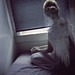 dark places by |Kelly Miller|