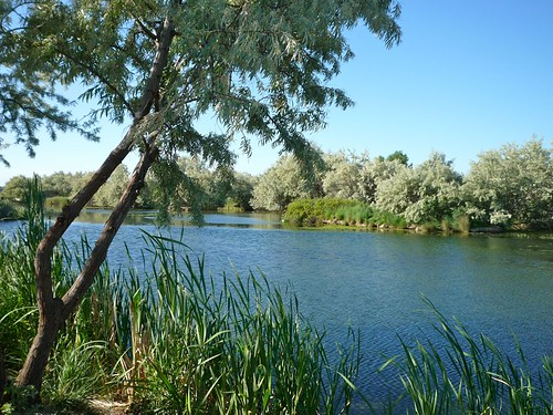 summer water pond flora idaho nampa northpond wilsonsprings pondscape wilsonponds