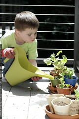 sequoia watering his plants on the back deck