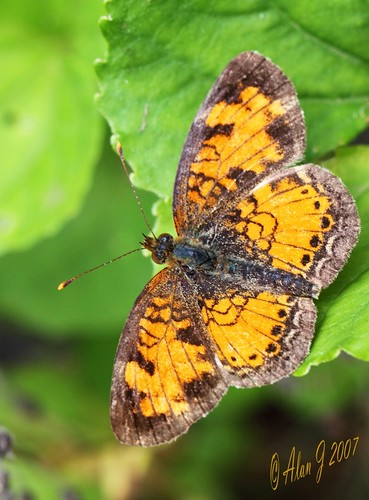 ny newyork canon butterfly adirondacks 7d upstatenewyork paulsmithscollege uppersaranaclake mygearandme 100mmmacrof28lisusm