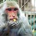 Mono comiendo - Parque de las Leyendas by Natalia Lui