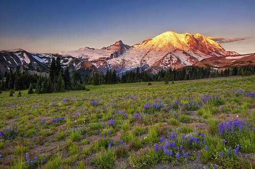 morning flowers light mountain sunrise landscape washington meadow first mountrainier wildflowers việtnam hànội