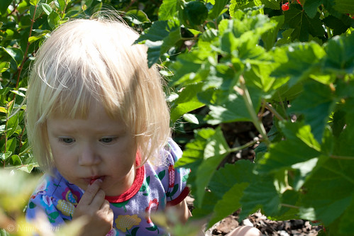 Nora loves redcurrants / Nora armastab sõstraid