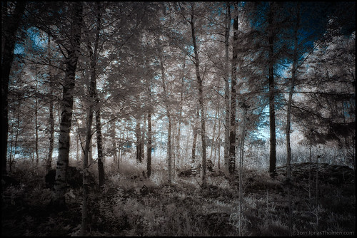 trees ir island sunny infrared falsecolor r72