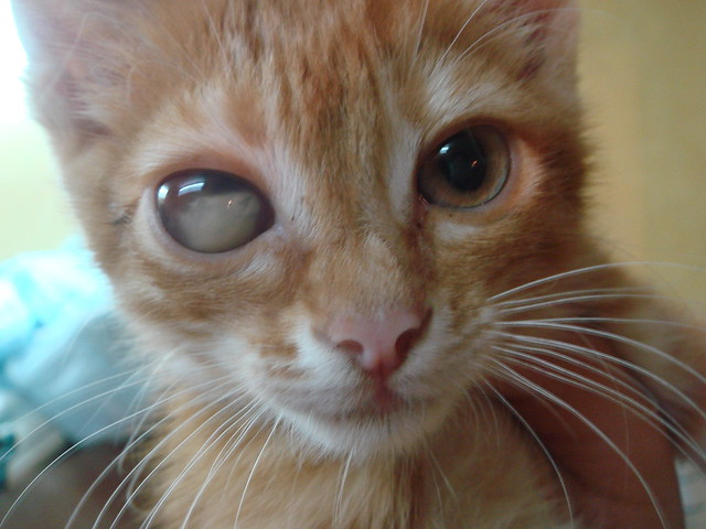 pinworms in cat