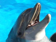 whale(0.0), short-beaked common dolphin(0.0), killer whale(0.0), tucuxi(0.0), animal(1.0), marine mammal(1.0), common bottlenose dolphin(1.0), marine biology(1.0), dolphin(1.0), rough-toothed dolphin(1.0),