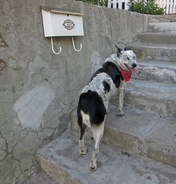 Dog Hiding Food Dieing