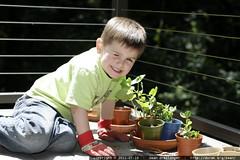 popeye tends his garden