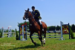 trail riding(0.0), endurance riding(0.0), physical exercise(0.0), animal sports(1.0), equestrianism(1.0), english riding(1.0), eventing(1.0), stallion(1.0), show jumping(1.0), hunt seat(1.0), equestrian sport(1.0), sports(1.0), recreation(1.0), outdoor recreation(1.0), equitation(1.0), horse(1.0), jockey(1.0), person(1.0),