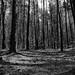 Lupojova Woods