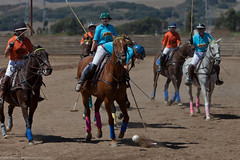 stick and ball games, animal sports, equestrian sport, sports, stick and ball sports, polo, ball game,