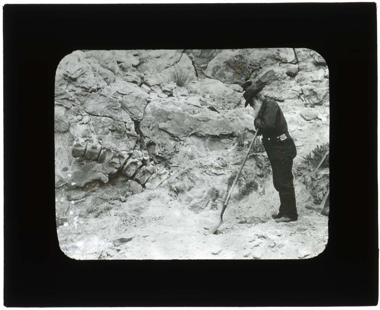 Discovery of fossils, Dinosaur National Monument, 1900-1935.