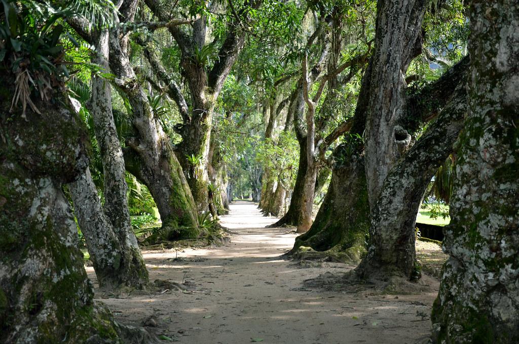 fotos jardim botanico do rio de janeiro:Jardim Botânico do Rio de Janeiro