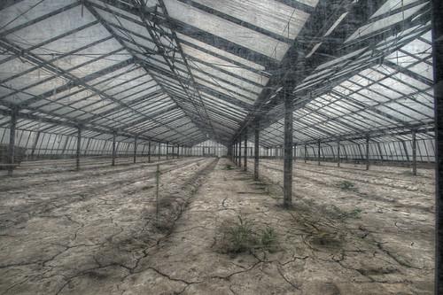 Greenhouse GL (AT)
