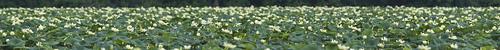 ohio panorama lotus clarksville cowanlake