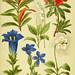 Alpen-Flora für Touristen und Pflanzenfreunde
