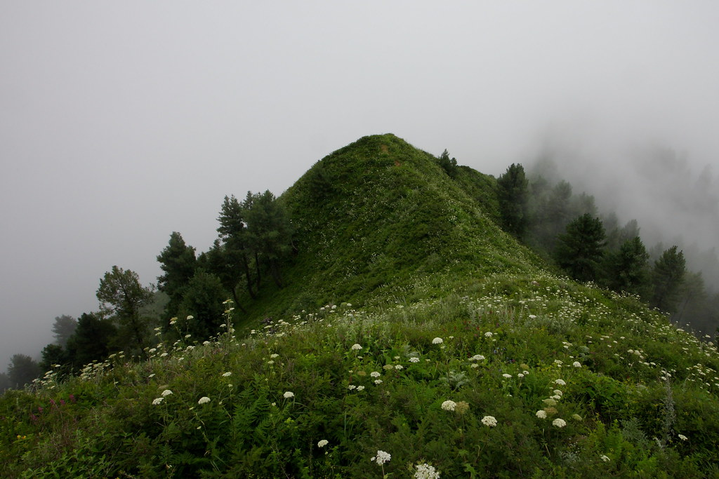 Miranjani: Flowers on the ridge