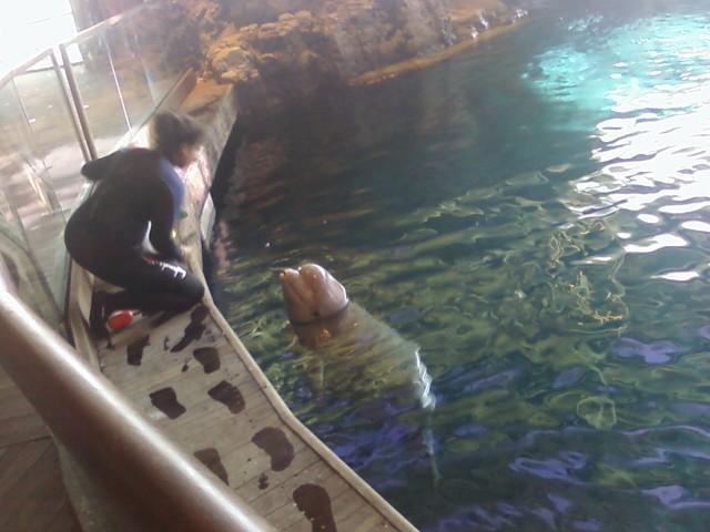 Beluga whale 7