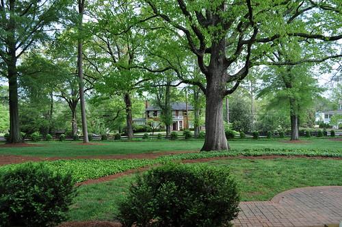 trees house museum ga