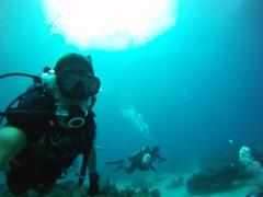 Bimini Diving