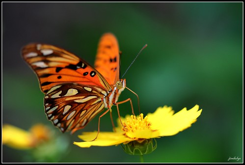 flower color macro closeup photoshop canon butterfly eating budapest sucking eos550d