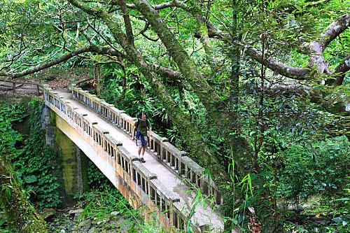 GN72滿月圓國家森林遊樂區-楓香拱橋