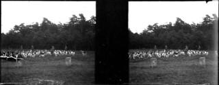 Les chiens, château de Chantilly, mai 1902