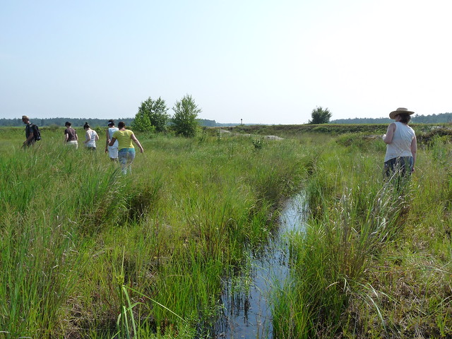 BBG staff cross a river in search of red milkweed (Asclepias rubra). Photo by Lauren Deutsch.