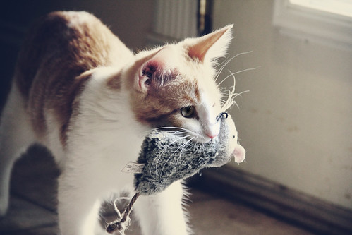 His Favorite Toy