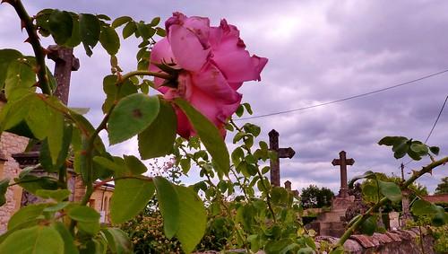 86/365 Flowers in the Graveyard