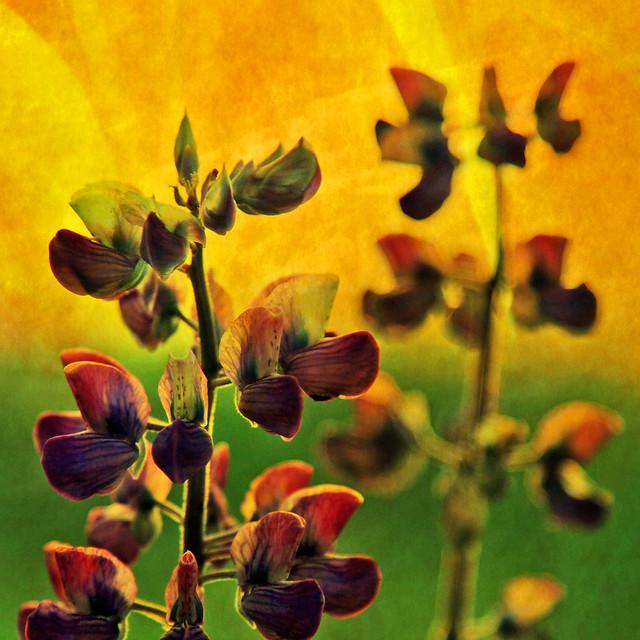 heavenly wildflowers